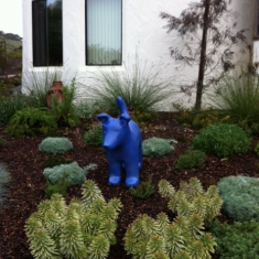 Blue Dog - A Beautiful Garden Setting