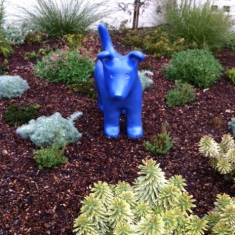 Blue Dog - Another Happy Home in San Luis Obispo