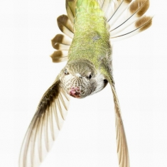 The Tail Spin - Photograph on Aluminum 20 x 30 Edition of 20